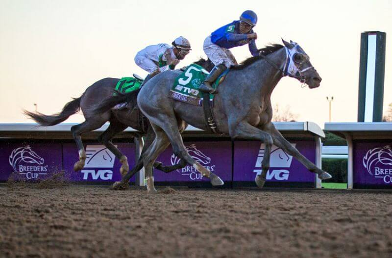 How To Bet - 2021 Belmont Stakes Action Report: Essential Quality Remains Solid Favorite