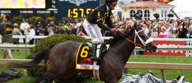 Belmont Stakes odds: Oxbow, Orb co-faves