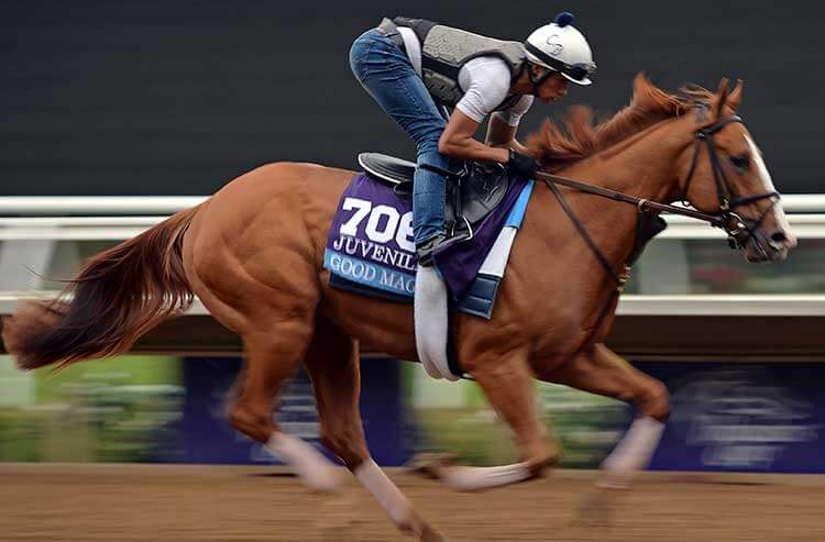 2018 Fountain Of Youth Stakes Horse Racing Betting Cheat Sheet