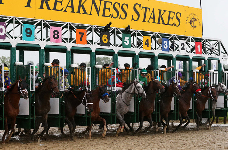 The best bets, prop predictions, and Preakness Stakes odds